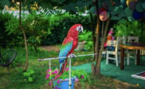 Шоу попугаев в Киеве